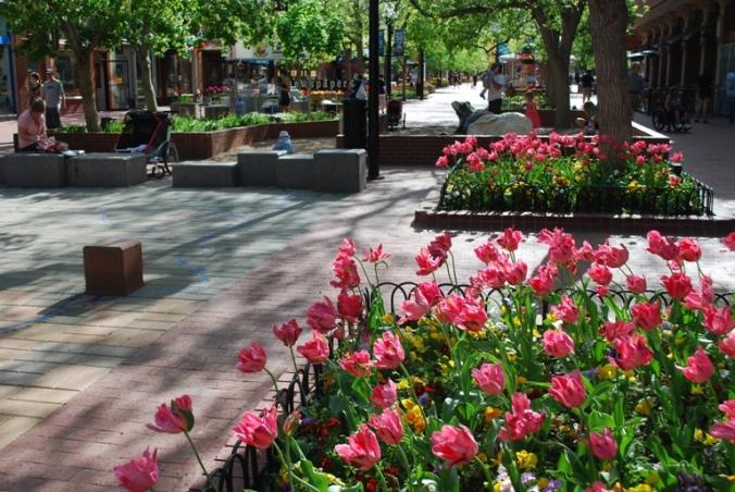 Tulips Pearl Street
