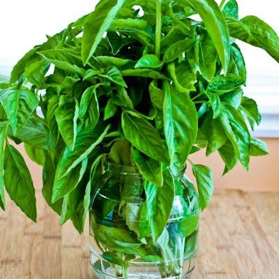 basil for deodorizing