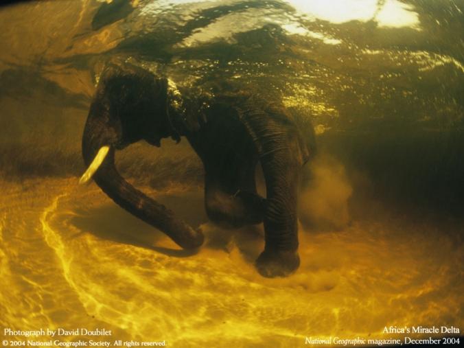 NatGeo: Swimming Elephants