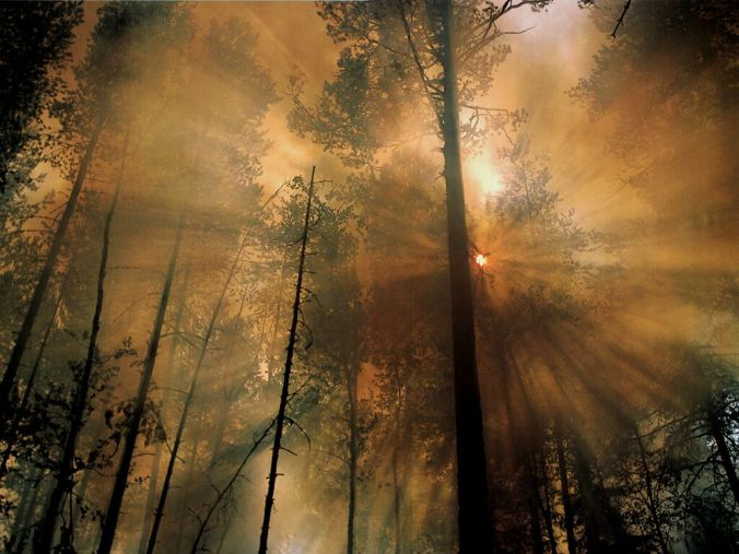NatGeo: Forest Fire in the Morning