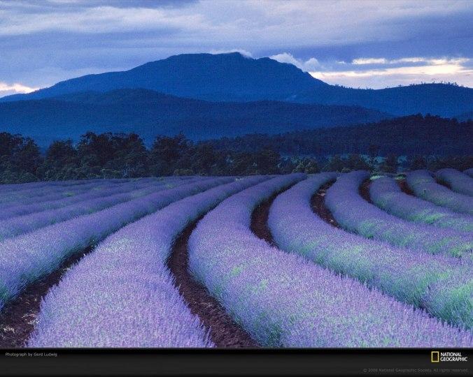 NatGeo: Fields of Lavender