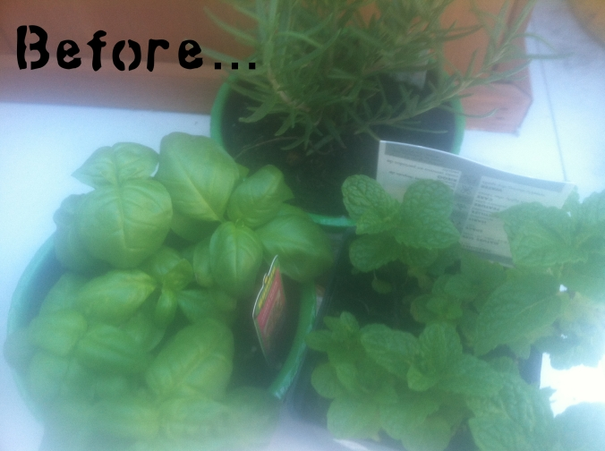 my little herbs, before