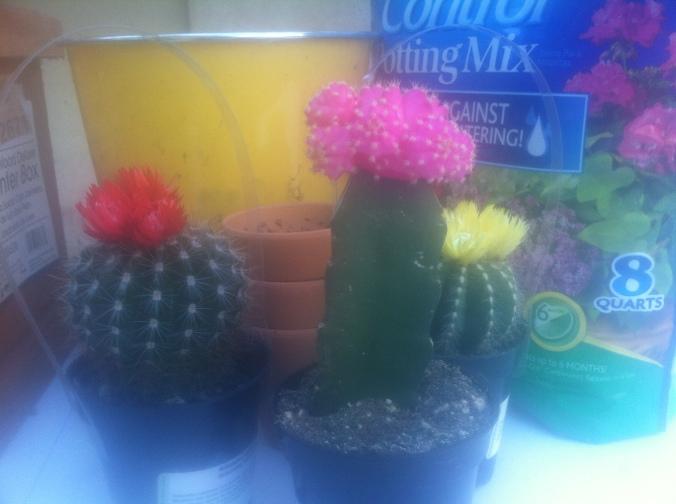 cactus planting