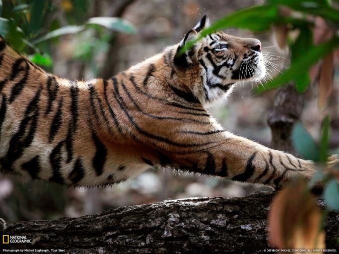 NatGeo: Morning Stretch