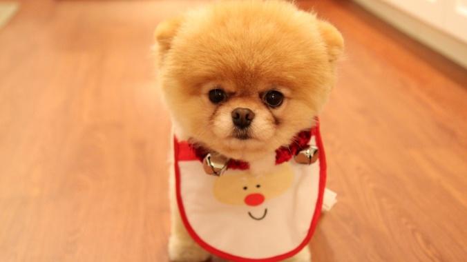 Boo's Christmas