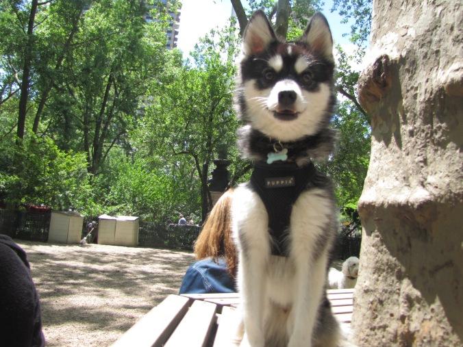 we made a new friend at the dog park... meet Derek Zoolander