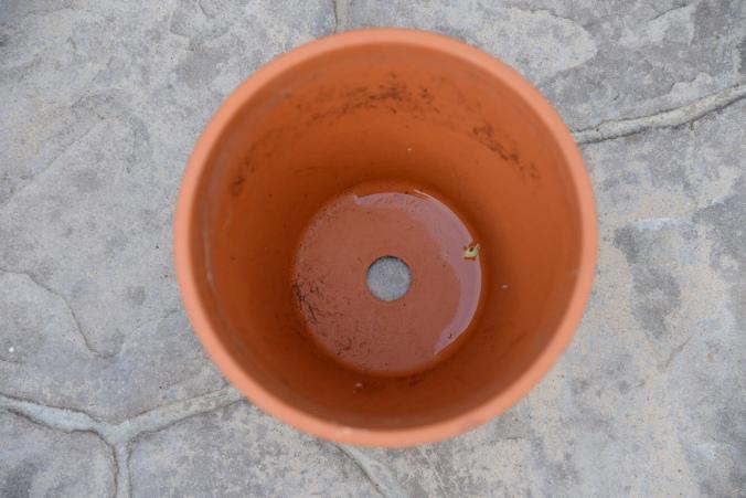 planting pots 1